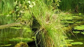 30-09-2016 16:23 Sensacja botaniczna. Nikt nie widział tej rośliny od zakończenia II wojny światowej