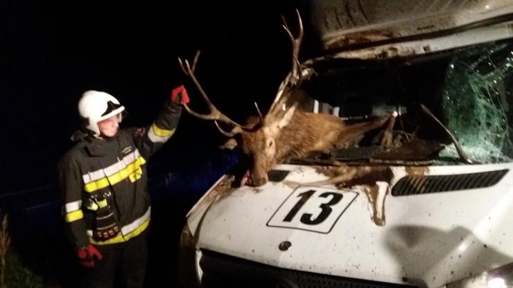 Jeleń wpadł do kabiny mercedesa. Nie przeżył uderzenia