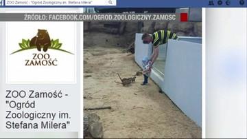Włożył dziecko do wybiegu dla zwierząt w zoo w Zamościu. Ogród publikuje zdjęcie