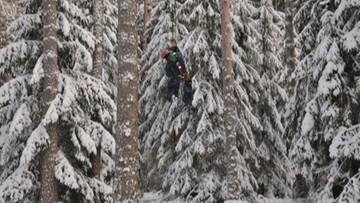 19-01-2017 17:56 Na najwyższe drzewa wspinają się alpiniści. Zbieracze szyszek wyruszyli do lasów