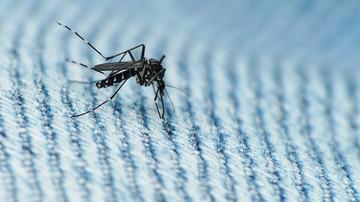 01-03-2016 07:13 Francuscy naukowcy: wirus Zika może powodować ciężkie schorzenie neurologiczne
