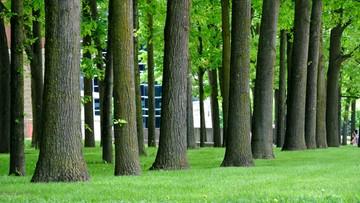 Wycinka drzew po rejestracji. Planowane poprawki w przepisach