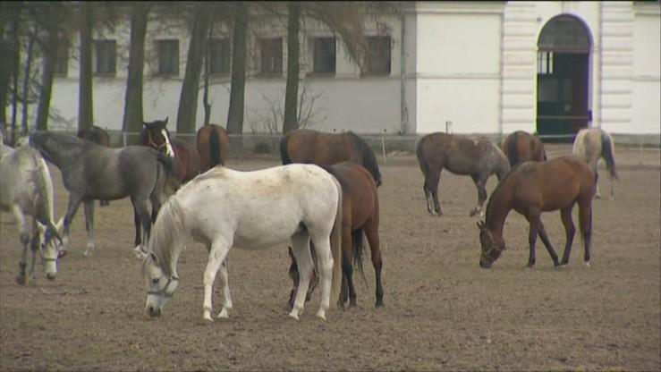 """Żona muzyka """"Rolling Stones"""" zabiera swoje konie ze stadniny w Janowie"""