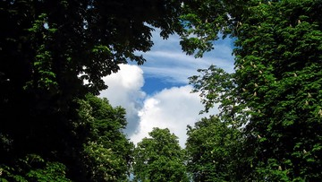 06-04-2016 18:43 Fundacja EkoRozwoju alarmuje: w miastach wycina się coraz więcej drzew