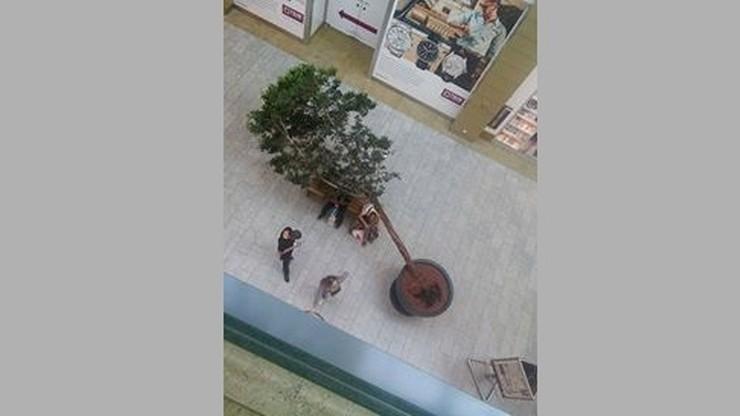 2016-08-18 Przewrócone drzewo w galerii handlowej w Krakowie