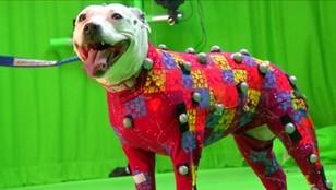 Biblioteka psich ruchów w Wielkiej Brytanii