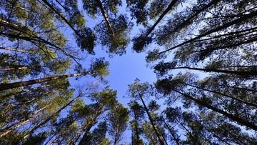 23-03-2016 21:14 Fundacja Ekorozwoju: w stolicach województw wycięto ok. 800 tys. drzew