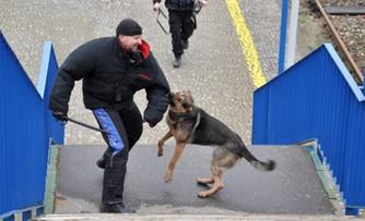 Szkolenie psów policyjnych na dworcu w Białymstoku
