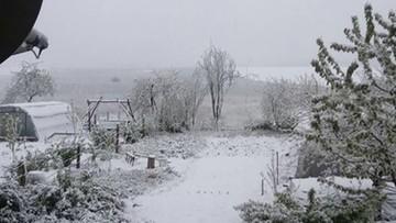 Zima w maju. Zdjęcia naszych użytkowników