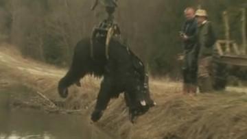 15-03-2016 19:38 Martwy niedźwiedź w Bieszczadach. Leśnicy badają, co mu się stało