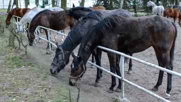 21-03-2016 11:50 Prezes ANR do szefa europejskiej organizacji hodowli koni arabskich: pomówienia i insynuacje