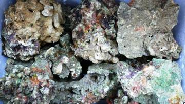 03-03-2016 17:16 Udaremniono przemyt 170 kg fragmentów żywej rafy koralowej