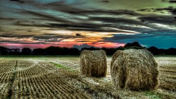 14-04-2016 10:14 Ziemia tylko dla rolników. Sejm uchwalił ustawę o obrocie gruntami rolnymi