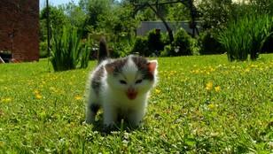Wrocław: wyrok dla właściciela niesfornego kota