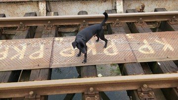 Pies przywiązany łańcuchem do torów. Czekała go pewna śmierć