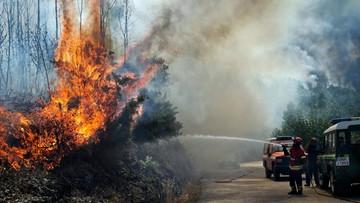09-08-2016 17:49 Pożary lasów na Maderze. Zatrzymano mężczyznę podejrzanego o wzniecenie ognia