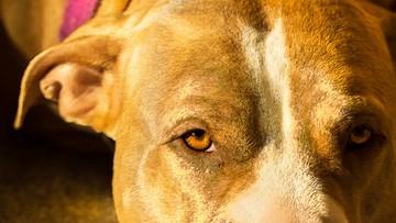 04-08-2016 16:08 Postrzelił psa. Potem go podpalił. Policja szuka sprawcy
