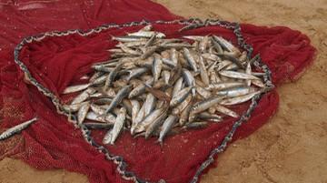 22-06-2017 00:39 Rybołówstwo: koniec z przekazywaniem kwot połowowych. Prezydent podpisał ustawę