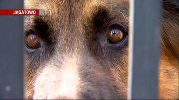29-09-2016 22:19 Ktoś otruł psy w powiecie gdańskim. Właścicielka apeluje o czujność