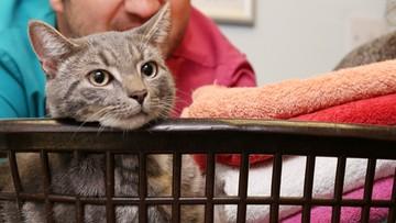 29-07-2016 14:02 Włączyła pralkę, w bębnie siedział jej kot. Nawet nie zmarnował jednego z dziewięciu żyć!
