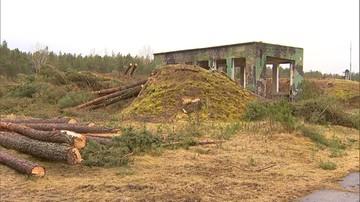 08-03-2017 15:59 Resort środowiska: wycinka drzew w Łebie była nielegalna
