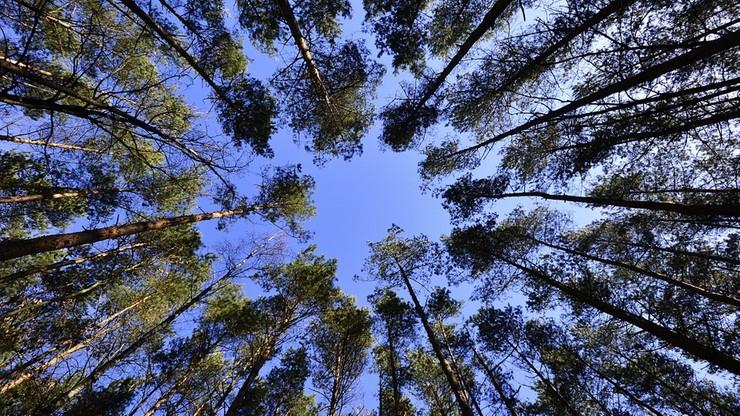 Fundacja Ekorozwoju: w stolicach województw wycięto ok. 800 tys. drzew