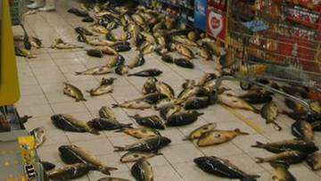 11-12-2016 13:18 Kilkadziesiąt żywych karpi na podłodze. Skandal w tyskim hipermarkecie