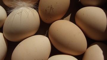 """Skażone jajka w Belgii. """"Nie były wysyłane do Polski"""""""