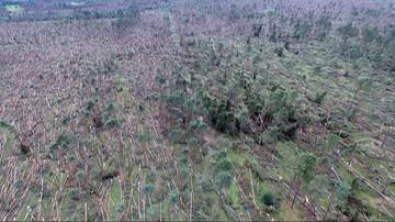 """12-08-2017 20:09 """"Morze"""" powalonych drzew. Film z drona po nawałnicy w Suszkach"""