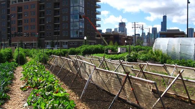 Kanada - po ziołach w przydomowym ogródku czas na kurnik