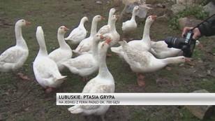 Lubuskie: wykryto ognisko wirusa ptasiej grupy, wdrożono odpowiednie procedury