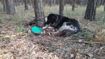 13-09-2016 18:13 Dostał psy w spadku. Nikt ich nie chciał, to przywiązał je do drzewa w lesie