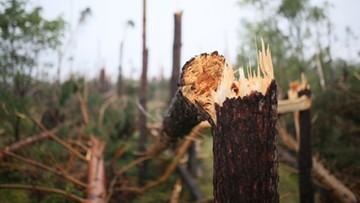 16-08-2017 19:40 Szyszko: usuwanie drewna zniszczonego w nawałnicach potrwa 2-3 lata