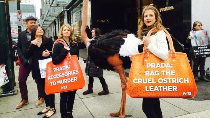 PETA kupiła akcje Prady. Żeby chronić strusie