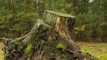 CBOS: badani podzieleni ws. dowolności usuwania drzew na własnej działce