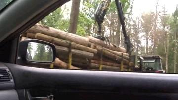 Nakaz wstrzymania wycinki drzew w Puszczy Białowieskiej. A drwale tną