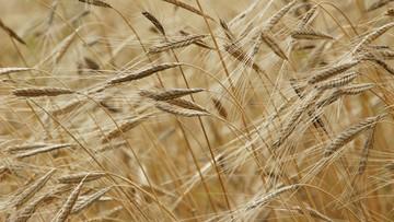 13-03-2017 07:09 100 tys. zł na własny biznes na wsi. ARMiR rozpoczyna nabór wniosków