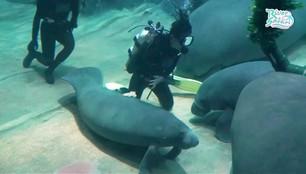 Urodziny manata. Huczne przyjęcie pod wodą