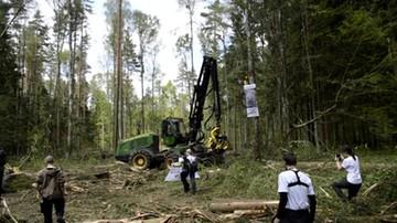 Firma wzywa ekologów do zapłaty za blokowanie wycinki w Puszczy Białowieskiej. Ich dane dostała od policji