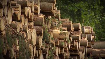 28-07-2017 10:19 Szyszko chce wyciąć w tym roku ok. 1,3 mln drzew w Puszczy Białowieskiej