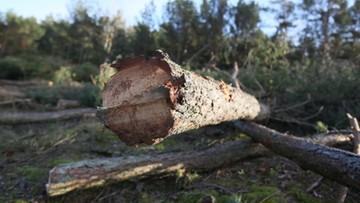 03-03-2017 17:43 Prokuratura wszczęła śledztwo ws. wycinki drzew w Łebie