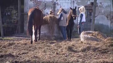 """27-03-2017 22:48 """"Głodzone i zaniedbane"""" konie. Właściciel stadniny nie zgadza się z zarzutami fundacji"""