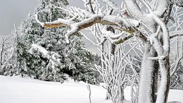 03-01-2017 19:54 Synoptycy ostrzegają przed śnieżycami i silnym wiatrem. Potem nadciągnie tęgi mróz