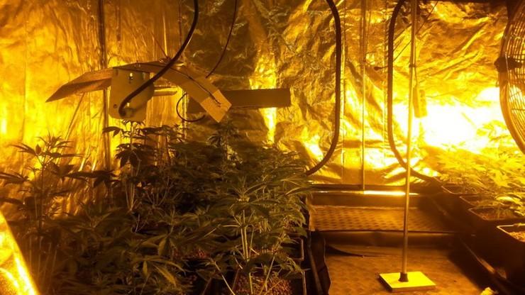 Zlikwidowano plantację marihuany w powiecie wadowickim