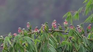Chiny: setki papug i... fotografów