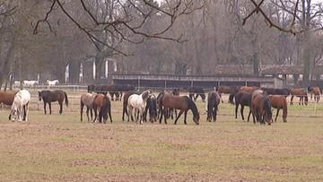 11-04-2016 18:23 Ministerstwo Rolnictwa: rada ds. hodowli koni w ciągu trzech tygodni