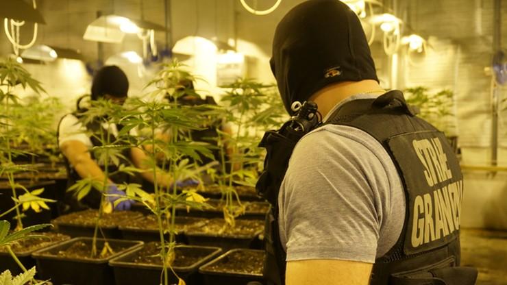 Dwupoziomowa plantacja konopi i narkotyki warte 12 mln zł. Wspólna akcja straży granicznej i policji
