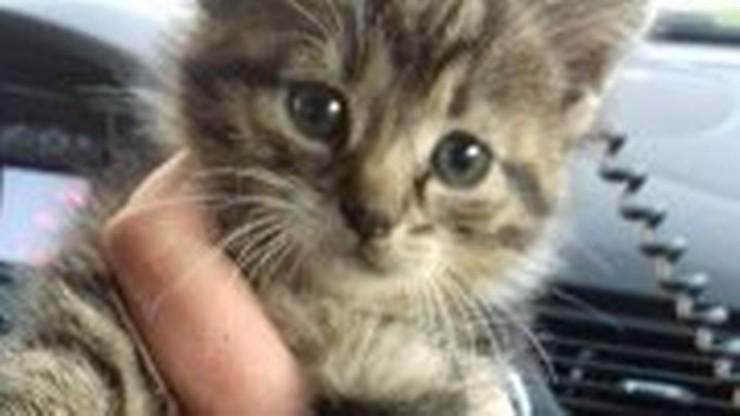 Policjant przygarnął uratowanego kotka. Zwierzak utknął w aucie w komorze silnika