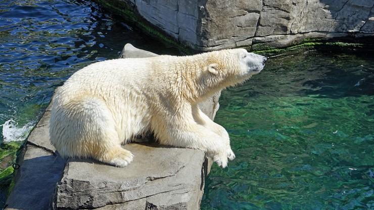 """""""Polaricum"""". Śląskie zoo chce zbudować obiekt poświęcony zwierzętom polarnym"""
