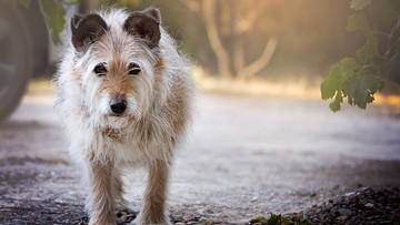 27-10-2016 12:12 Posprzątał po psach, ale i tak dostał mandat. Za brak torebki na odchody